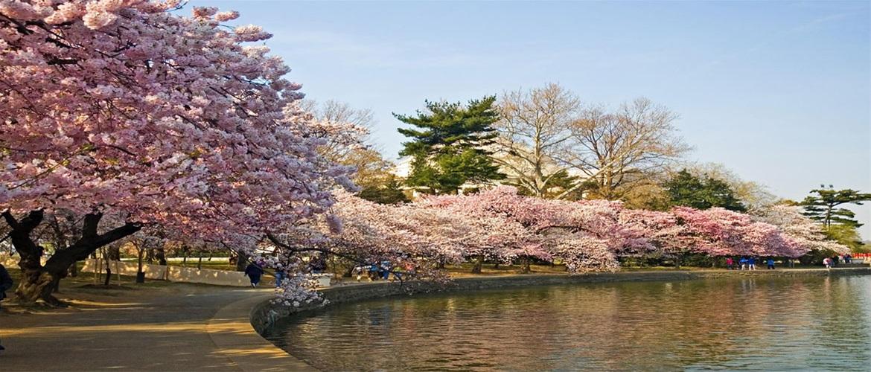 γνωριμίες σε Ιαπωνία ιστοσελίδα γνωριμιών με δωρεάν δοκιμή