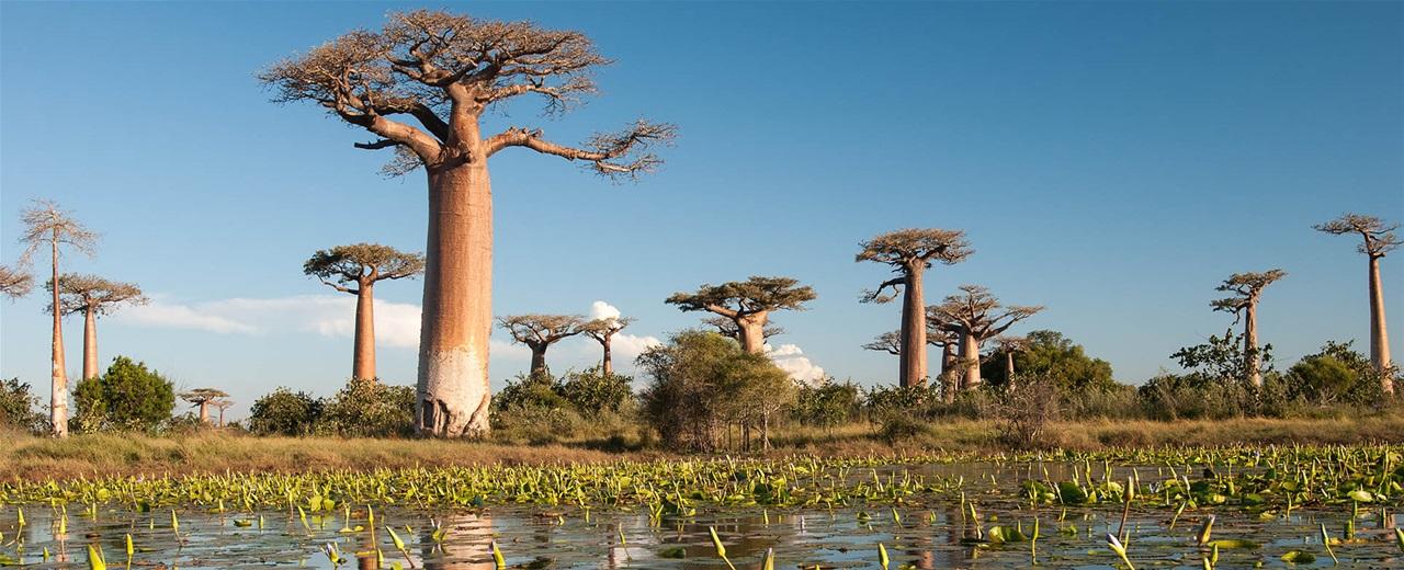 Αποτέλεσμα εικόνας για Μαδαγασκάρη